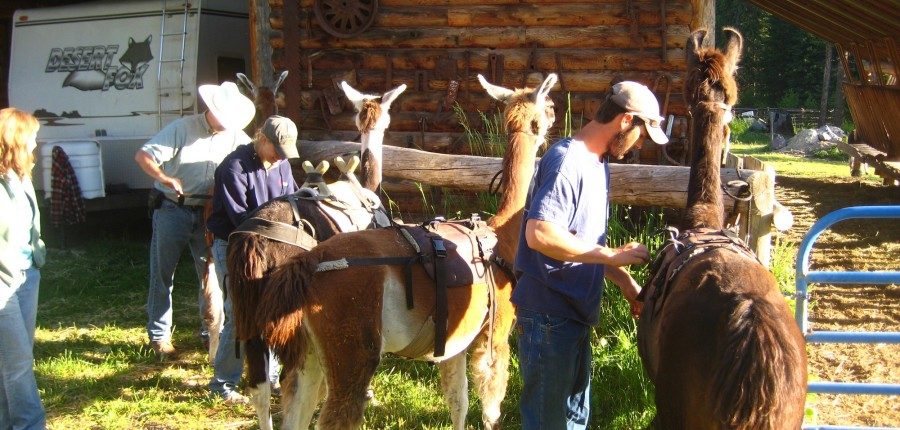 Llama Packing and Trekking Clinics
