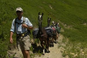 A guest with llamas on one of our guided hiking trips.