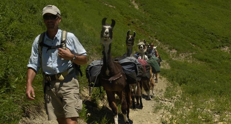 Daily Llama Treks