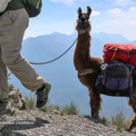 Hassle free guided hikes in Montana's mountains