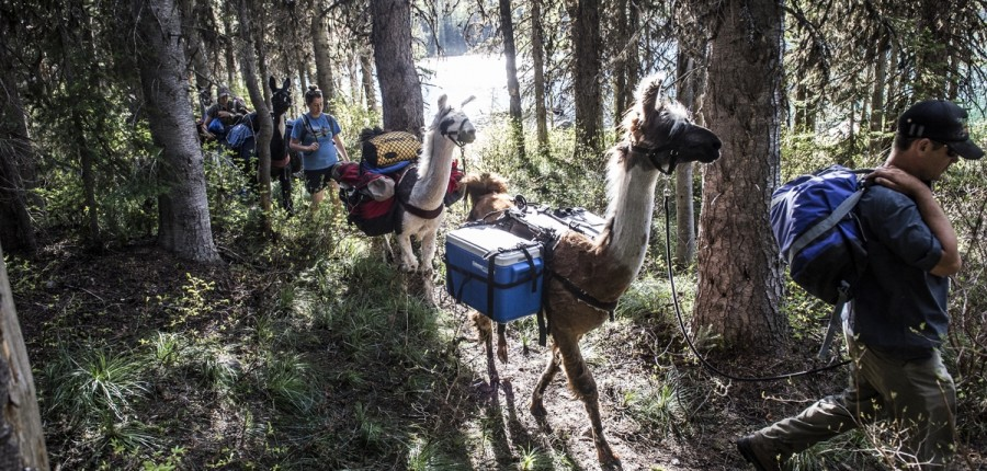 5 Day Trek to Bob Marshall Wilderness