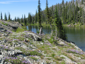 Beautiful mountain lake on our Montana camping trips