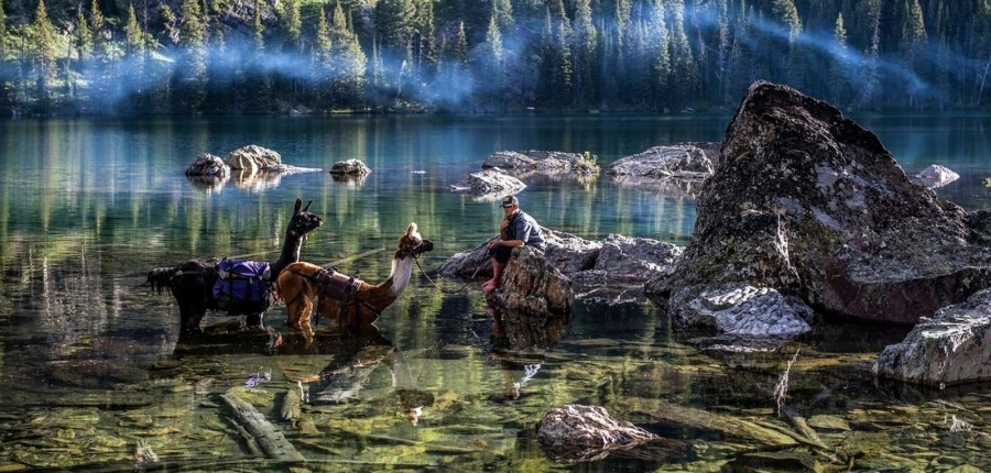 Llama Rentals for Hunting Montana
